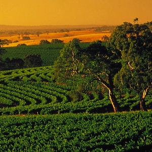 McVale to Barossa image